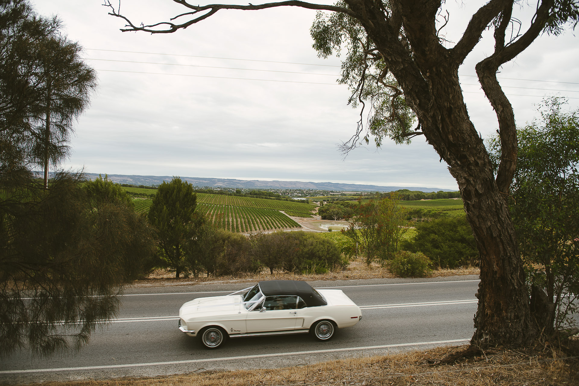 white mustang wedding car arriving with bride at beach road wines in mclaren vale